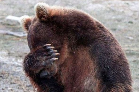 facepalm-bear-560x560.0.0